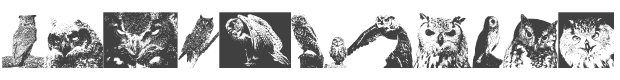 A Parliament of Owls 3 font family